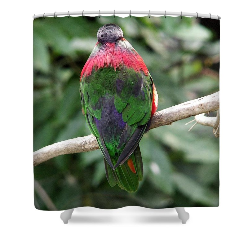 Bird Shower Curtain featuring the photograph A Bird's Perspective by Amy Fose