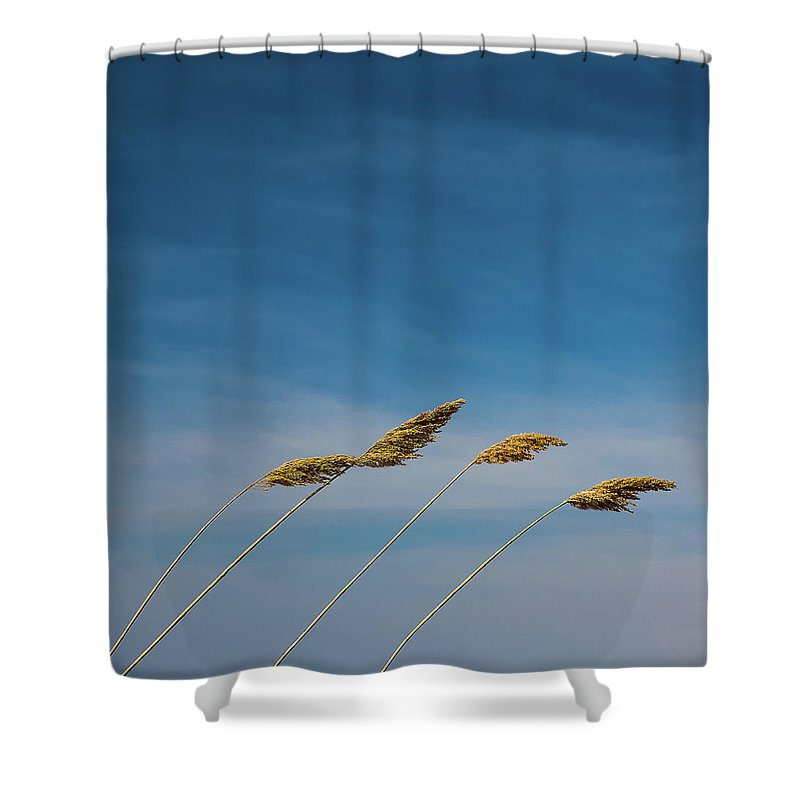 Wind Shower Curtain featuring the photograph A Blustery Day by Su Buehler