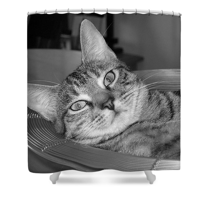 Cat Shower Curtain featuring the photograph A Bowl Of Ginger by Maria Bonnier-Perez