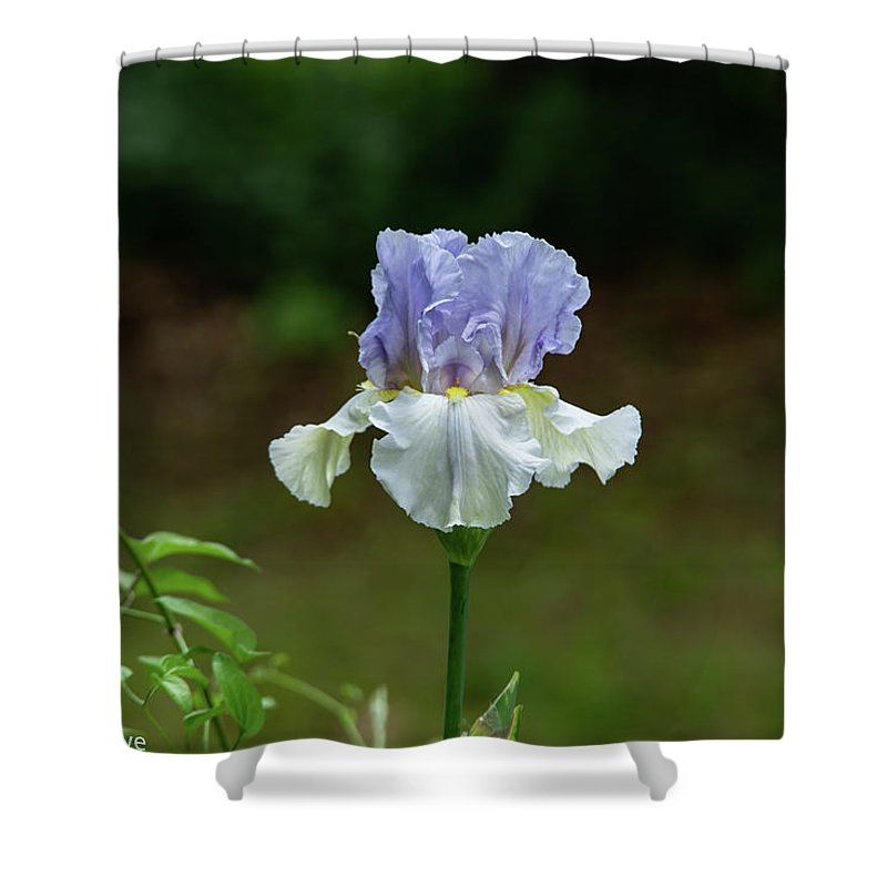 Violet Shower Curtain featuring the photograph A Bright Day by James Breedlove