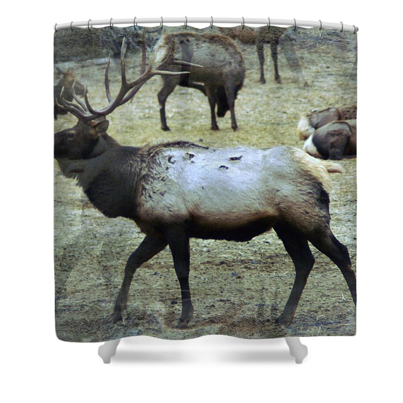 Elk Shower Curtain featuring the photograph A Bull Elk by Jeff Swan