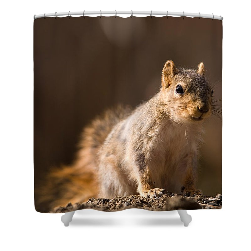 Nobody Shower Curtain featuring the photograph A Close-up Of A Fox Squirrel Sciurus by Joel Sartore