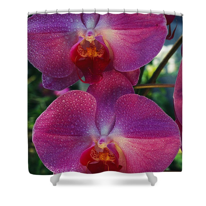 North America Shower Curtain featuring the photograph A Close View Of An Exquisite by Jonathan Blair