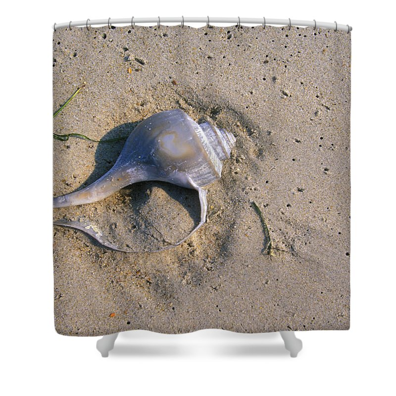 Conch Shower Curtain featuring the photograph A Conch Shell Lies In The Sand by Stephen Alvarez
