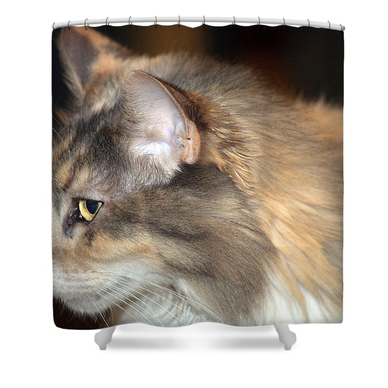 Cat Shower Curtain featuring the photograph A Contemplative Little Princess by Kenneth Albin
