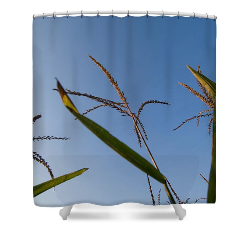 Photography Shower Curtain featuring the photograph A Corn Field At The Historic Waveland by Joel Sartore