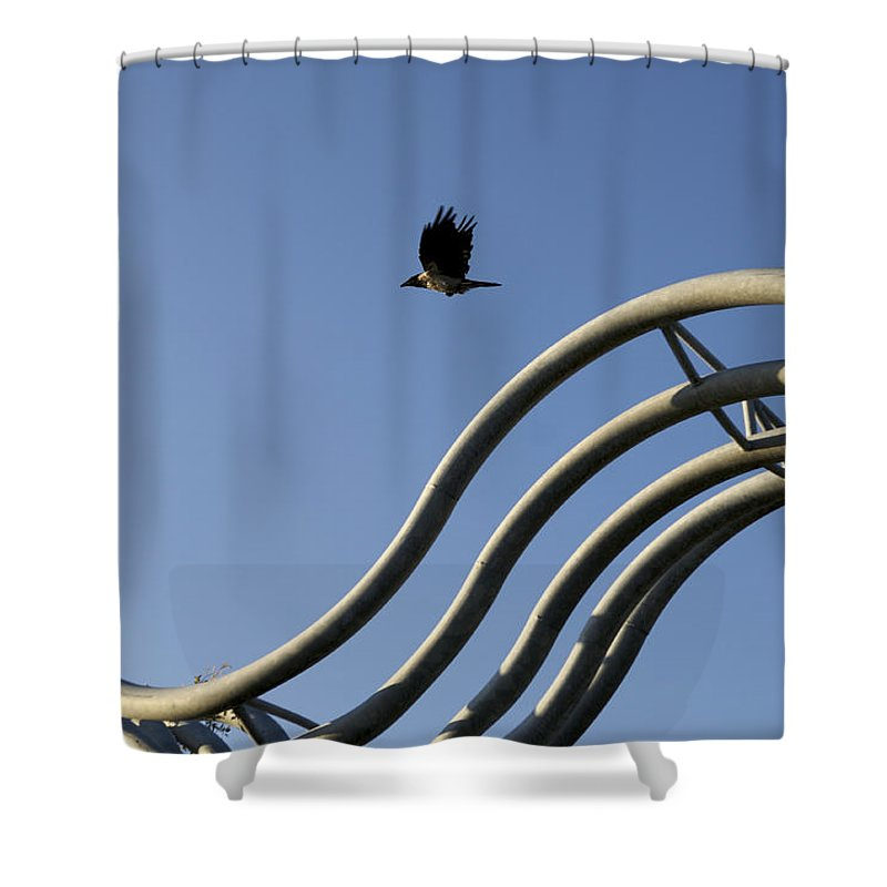 Animal Shower Curtain featuring the photograph A Crow In Flight, Arhus, Denmark by Keenpress