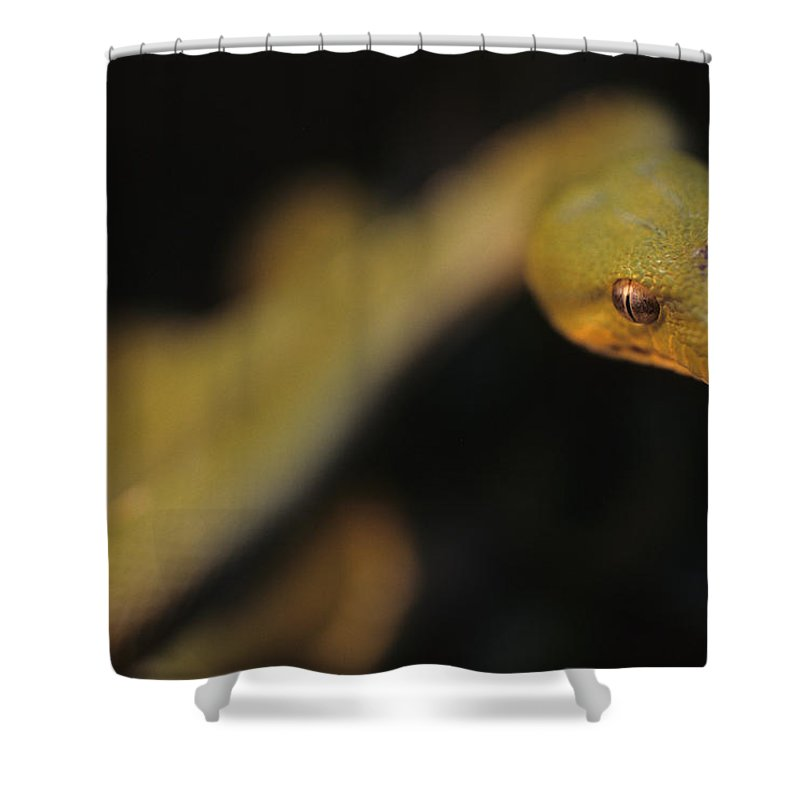 District Of Columbia Shower Curtain featuring the photograph A Curious Immature Green Tree Python by Taylor S. Kennedy