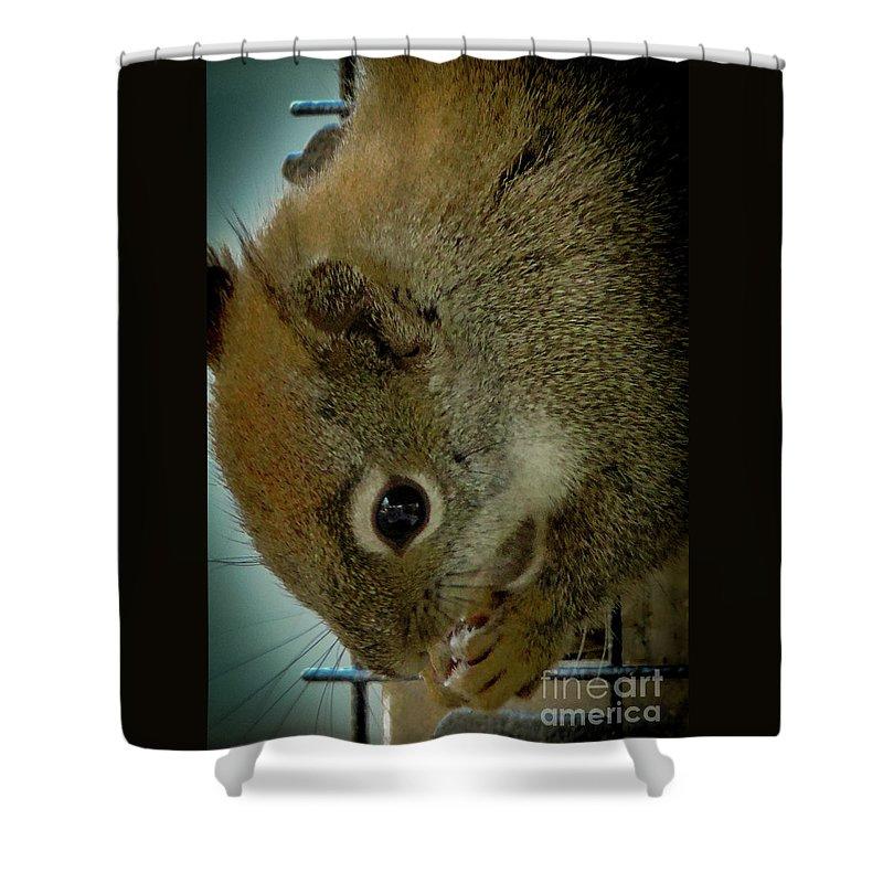 Red Squirrel Shower Curtain featuring the photograph A Cute Thief by Randy J Heath