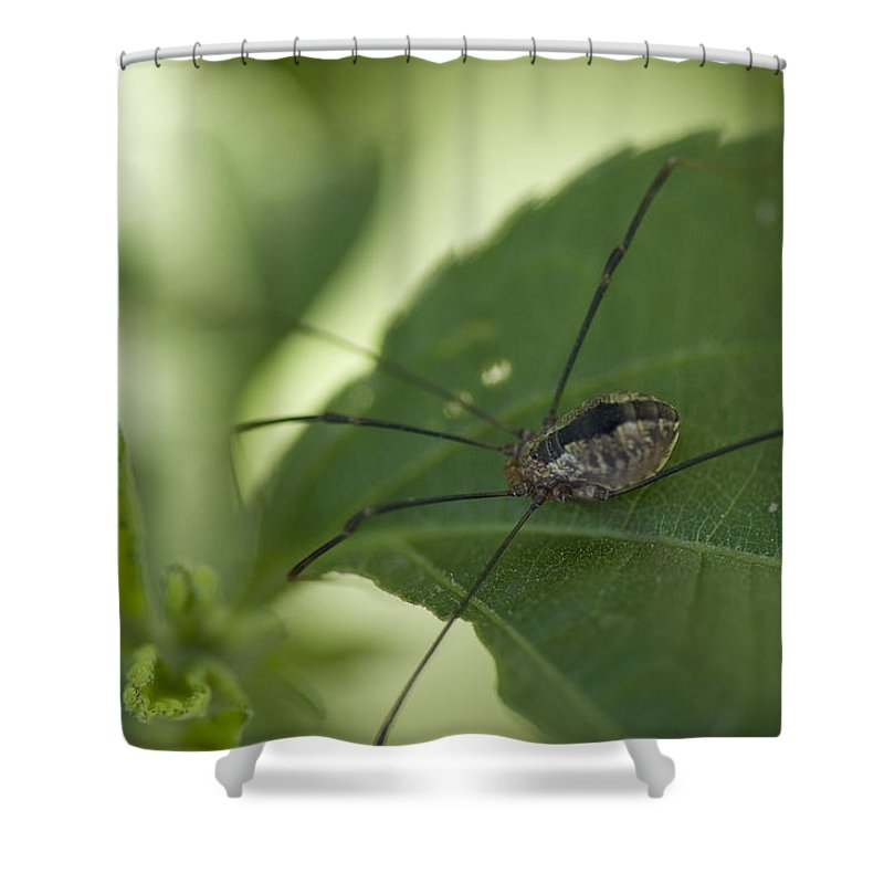 Photography Shower Curtain featuring the photograph A Daddy Longlegs Spider Sits On A Leaf by Joel Sartore