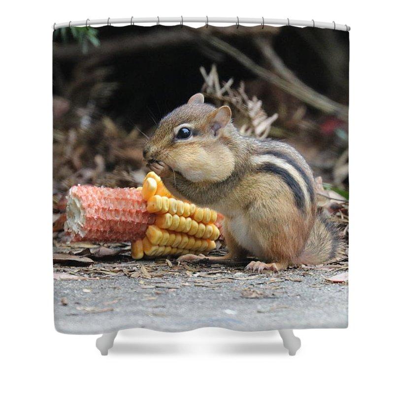 Chipmunk Shower Curtain featuring the photograph A Delicious Treat - Chipmunk Eating Corn by Scott D Van Osdol