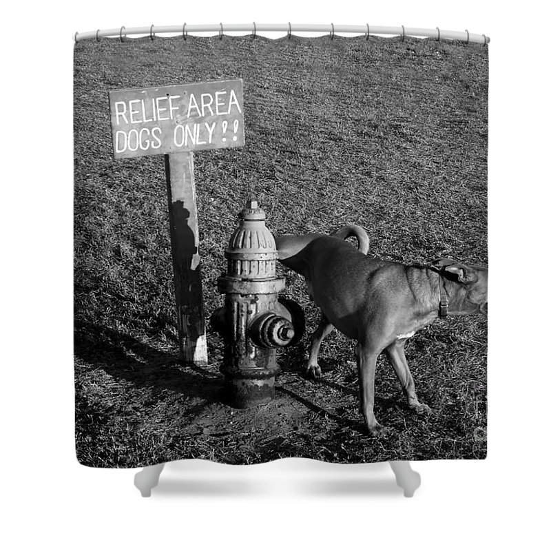 Dog Shower Curtain featuring the photograph A Dog's Life by David Lee Thompson