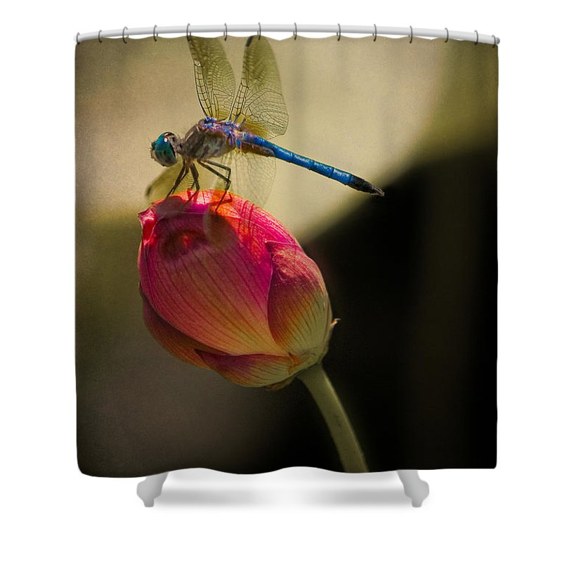 Lotus Shower Curtain featuring the photograph A Dragonfly Rests Momentarily On A Lotus Bud by Chris Lord