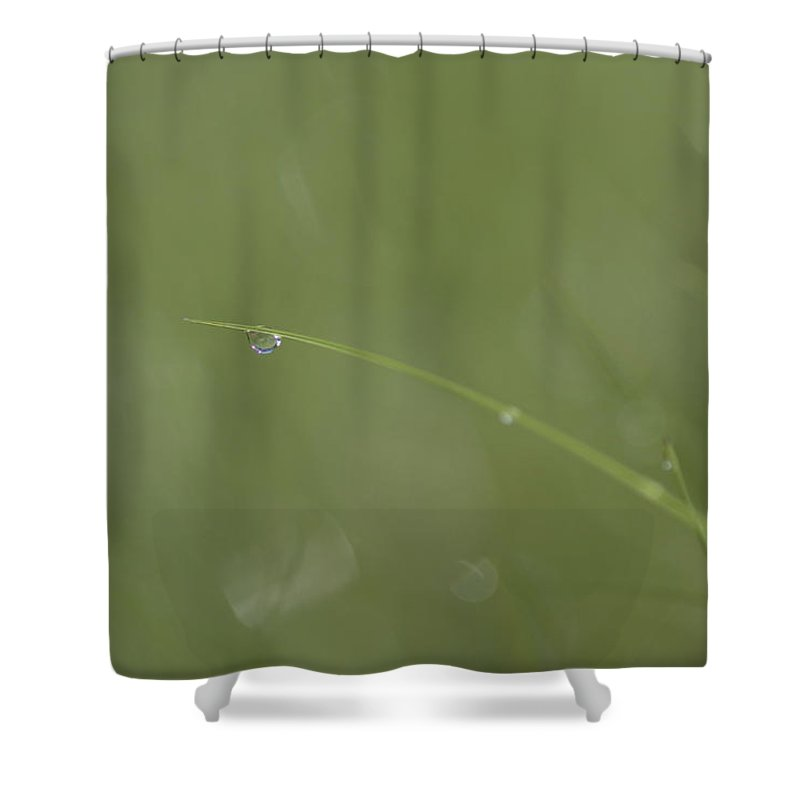Quebec Shower Curtain featuring the photograph A Drop Of Dew Dangles From The End by Taylor S. Kennedy