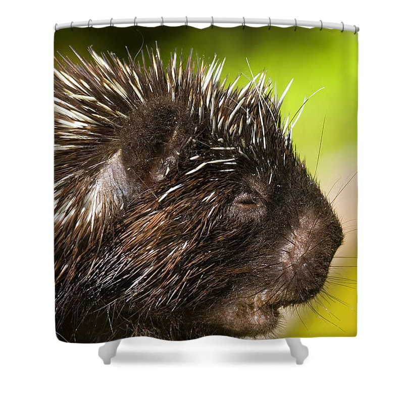 Porcupine Shower Curtain featuring the photograph A Face Only A Mother Could Love by Mike Dawson