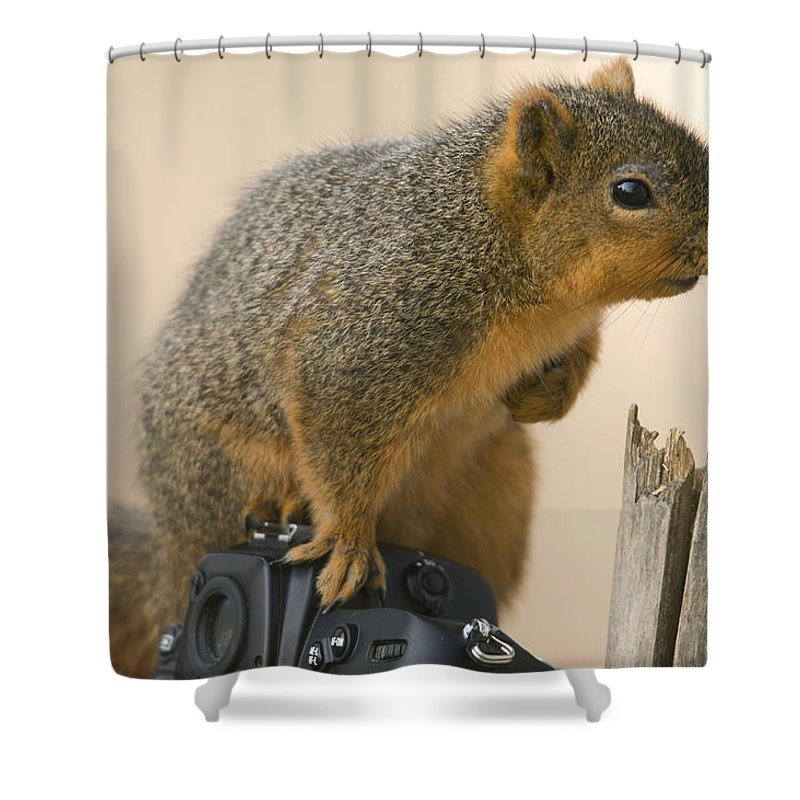 Photography Shower Curtain featuring the photograph A Fox Squirrel Sciurus Niger Sits by Joel Sartore