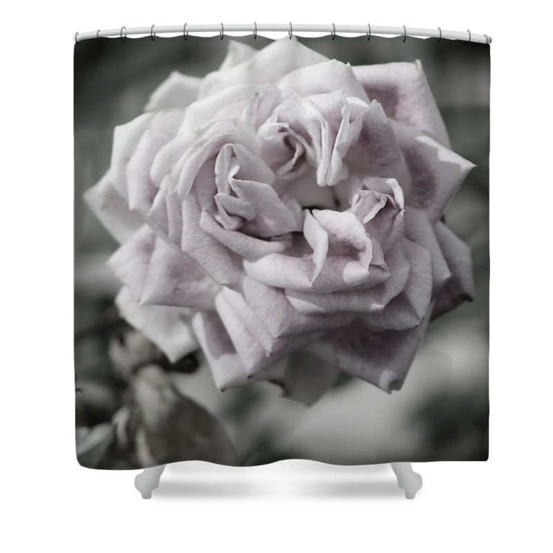 French Shower Curtain featuring the photograph A French Manicure Almost Black and White Pale Pink Rose Photograph by Colleen Cornelius