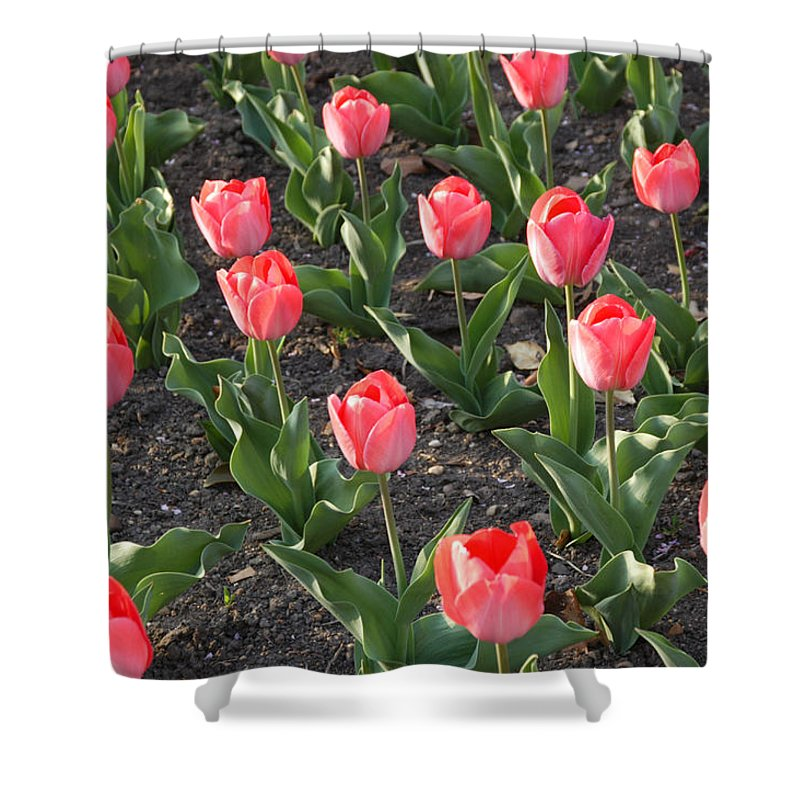 Washington Shower Curtain featuring the photograph A Garden Full Of Tulips by Stacy Gold
