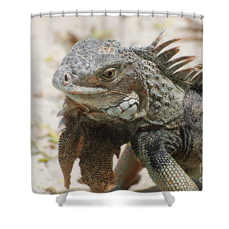 Iguana Shower Curtain featuring the photograph A Gray Iguana With Spines Along It's Back by DejaVu Designs