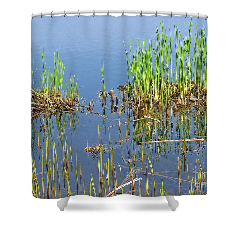 Spring Shower Curtain featuring the photograph A Greening Marshland by Ann Horn