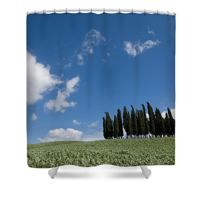 Photography Shower Curtain featuring the photograph A Group Of Cypress Trees Dot A Tuscan by Joel Sartore