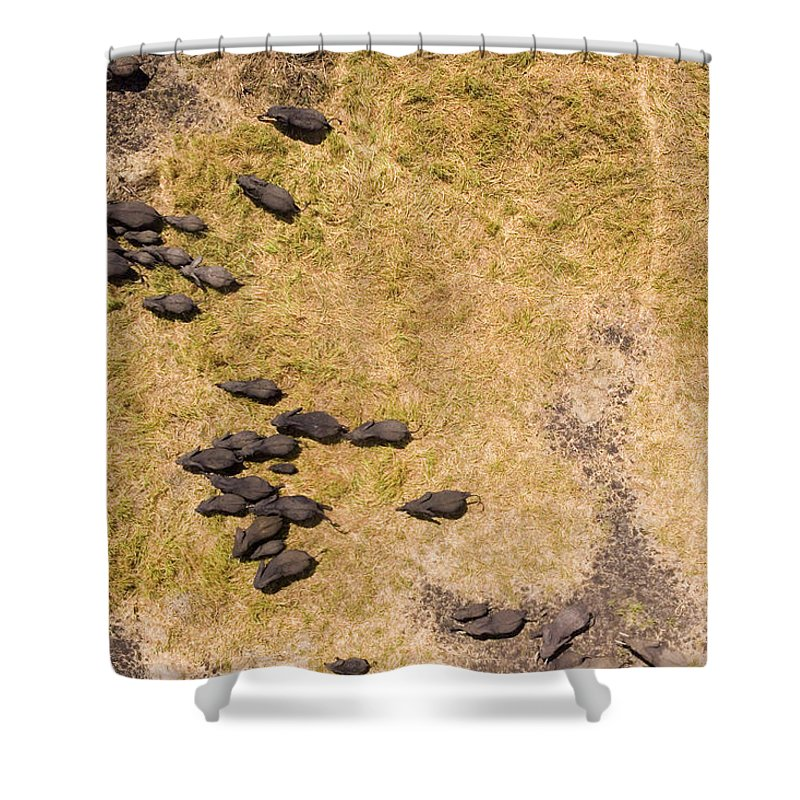 Landscape Shower Curtain featuring the photograph A Herd Of 100+ Elephants, Sw Corner by Michael Fay