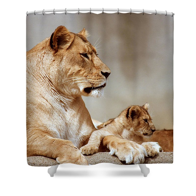 Lion Shower Curtain featuring the photograph A Lioness And Cub by Gary Adkins