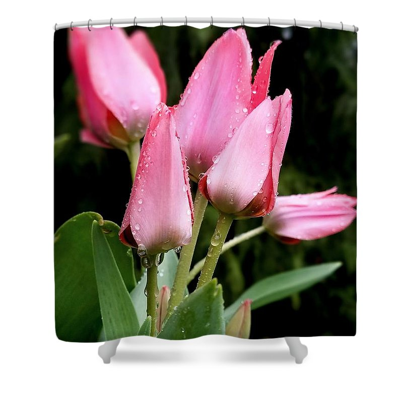 Flower Shower Curtain featuring the photograph A Little Sunshine Please by Teresa A Lang