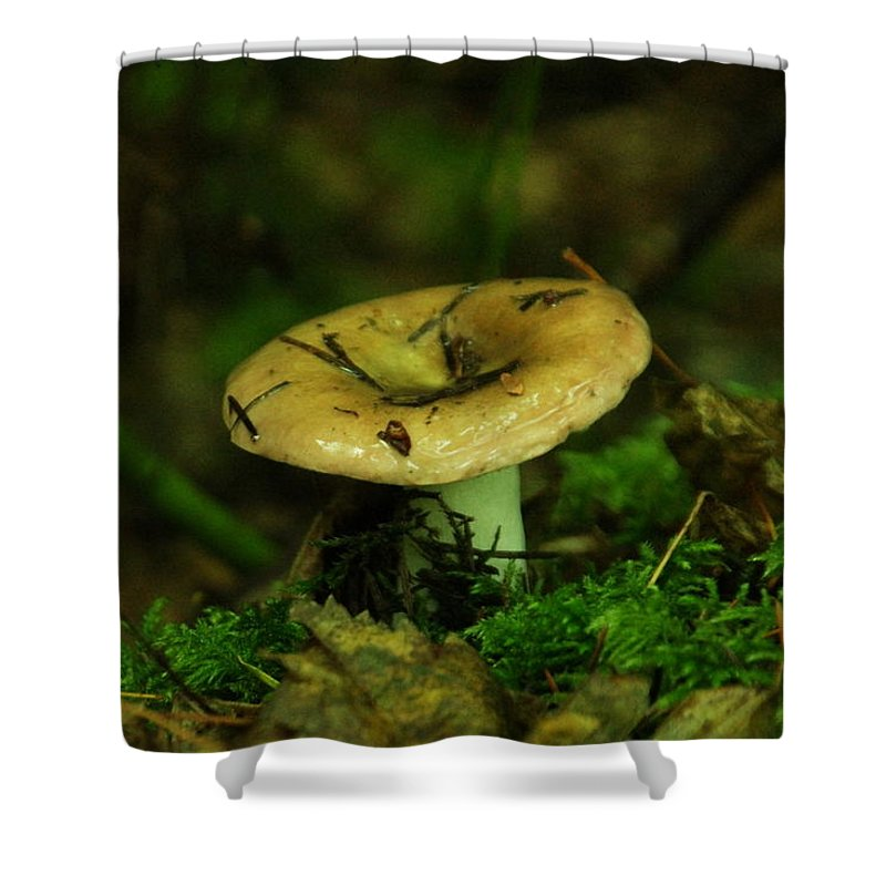 Tiny Shower Curtain featuring the photograph A Little Wet Mushroom by Jeff Swan