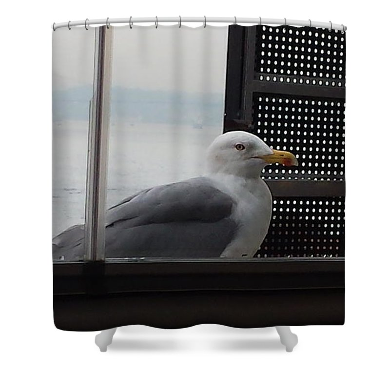 Seagull Shower Curtain featuring the photograph A Looking Seagull by Ayman Alenany