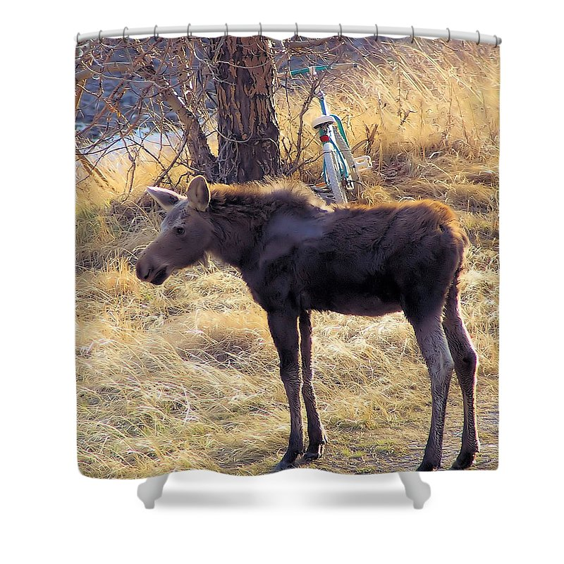 Wildlife Shower Curtain featuring the photograph A Moose In Early Spring by Jeff Swan