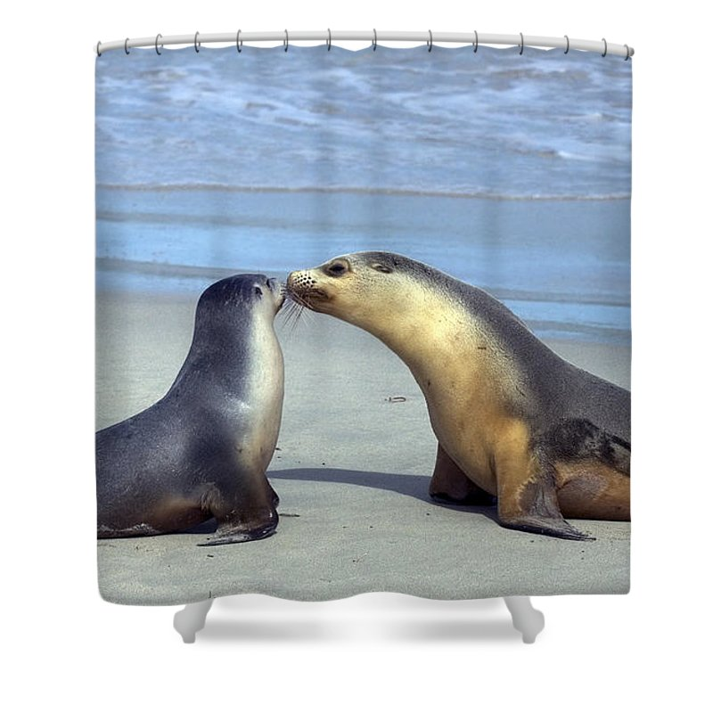 Sea Lion Shower Curtain featuring the photograph A Mothers Love by Mike Dawson