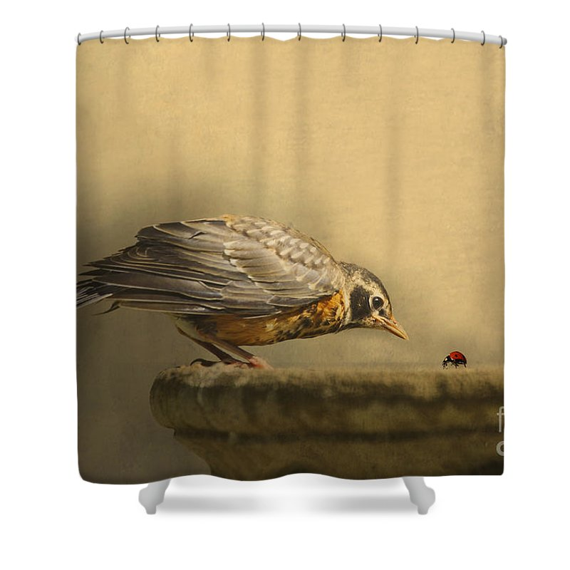 Robin Shower Curtains