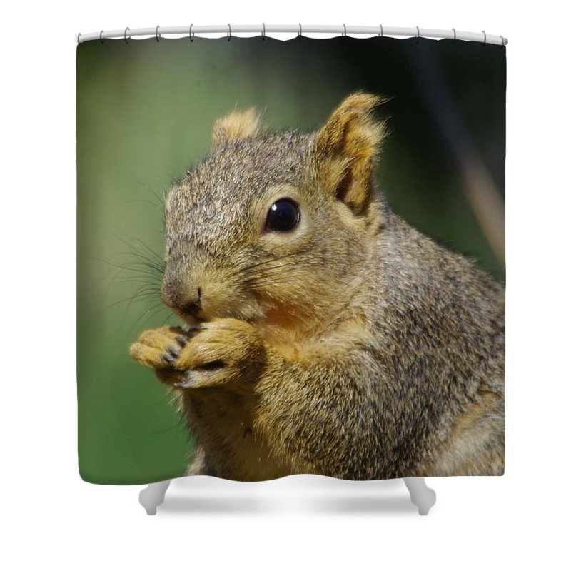 Squirrel Shower Curtain Featuring The Photograph A Nibbling By Jeff Swan