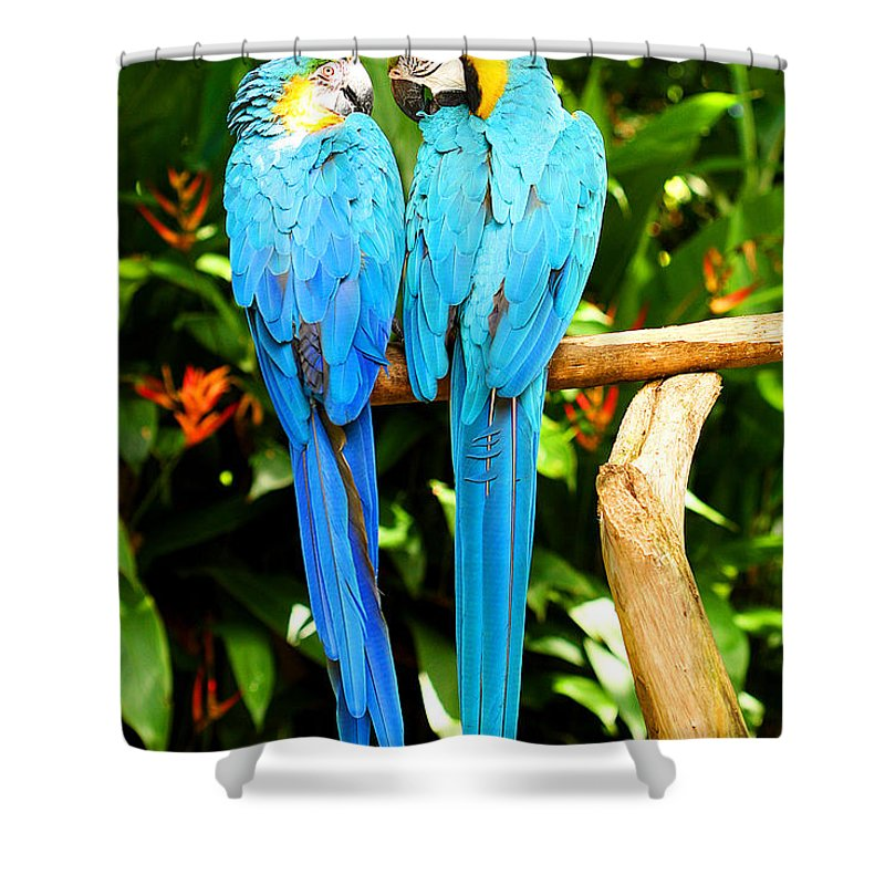 Bird Shower Curtain featuring the photograph A Pair of Parrots by Marilyn Hunt