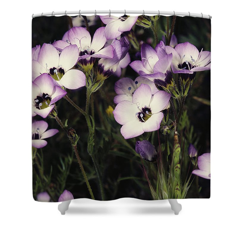 Armstrong Redwoods State Park Shower Curtain featuring the photograph A Patch Of Wildflowers With White by Sylvia Sharnoff