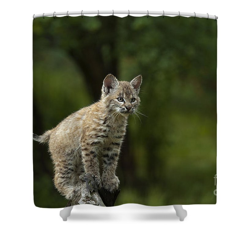 Lynx Shower Curtain featuring the photograph A Perch With A View by Sandra Bronstein