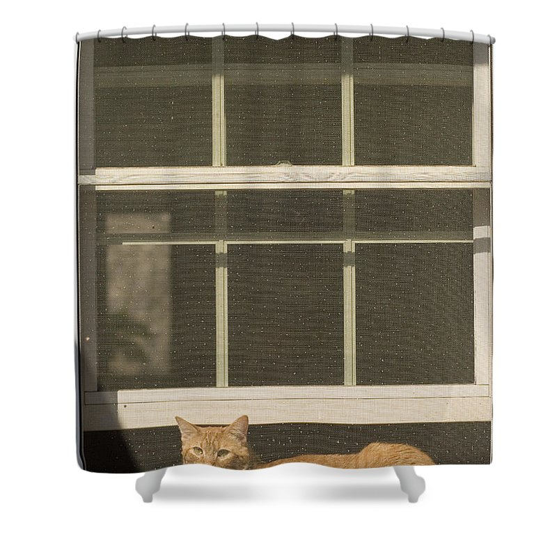 Day Shower Curtain featuring the photograph A Pet Cat Resting In A Screened Window by Charles Kogod