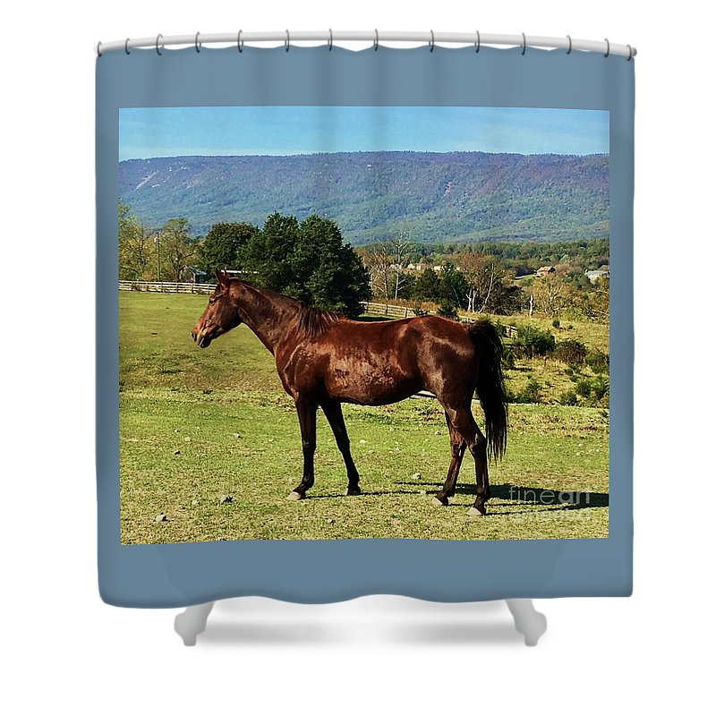 Horse Portrait Art Animal Art Outdoors Beauty Mountains Tennessee Walker Nature Rural Trees Equine Capture Canvas Print Wood Print Metal Frame Poster Print Available On Greeting Cards Tote Bags Shower Curtains Mugs New Spiral Note Books Fleece Blankets And Throw Pillows Shower Curtain featuring the photograph A Portrait Of Annie In Virginia by Courtney Dagan For Poet's Eye