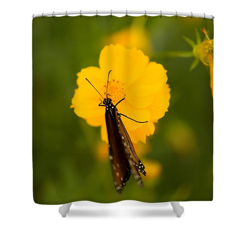 Photography Shower Curtain featuring the photograph A Queen Butterfly At The Lincoln by Joel Sartore