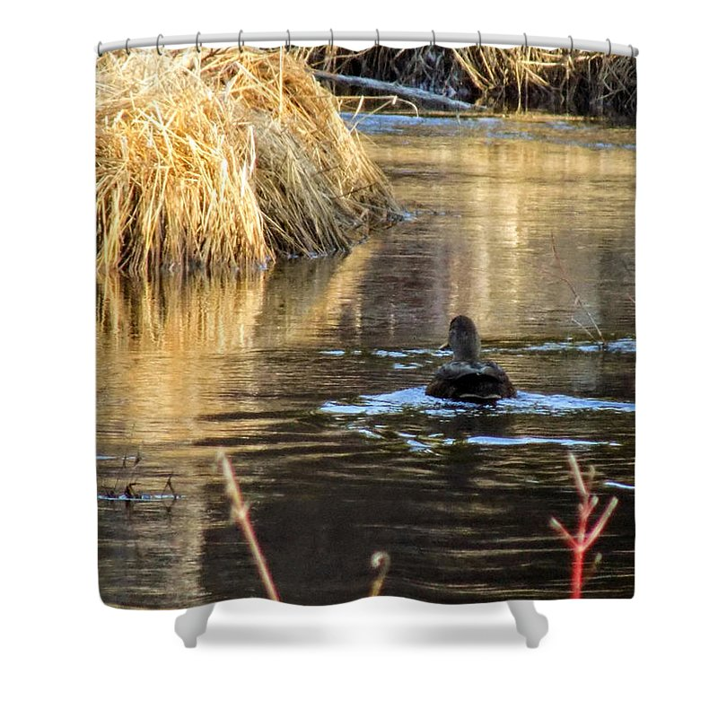 Ducks Shower Curtain featuring the photograph A Quiet Morning Swim by William Tasker