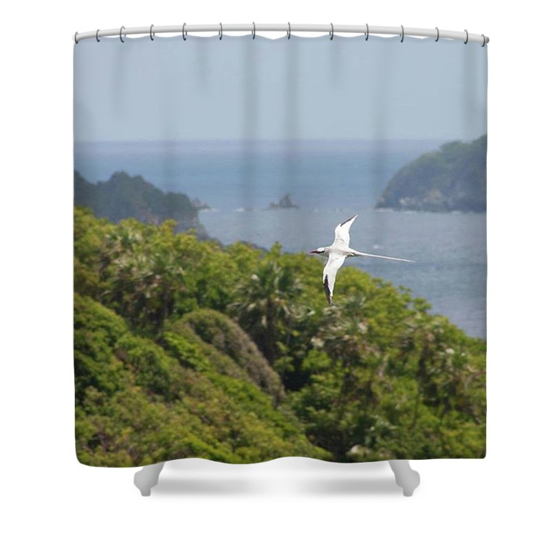 Tropicbird Shower Curtain featuring the photograph A Red-billed Tropicbird (phaethon by John Edwards