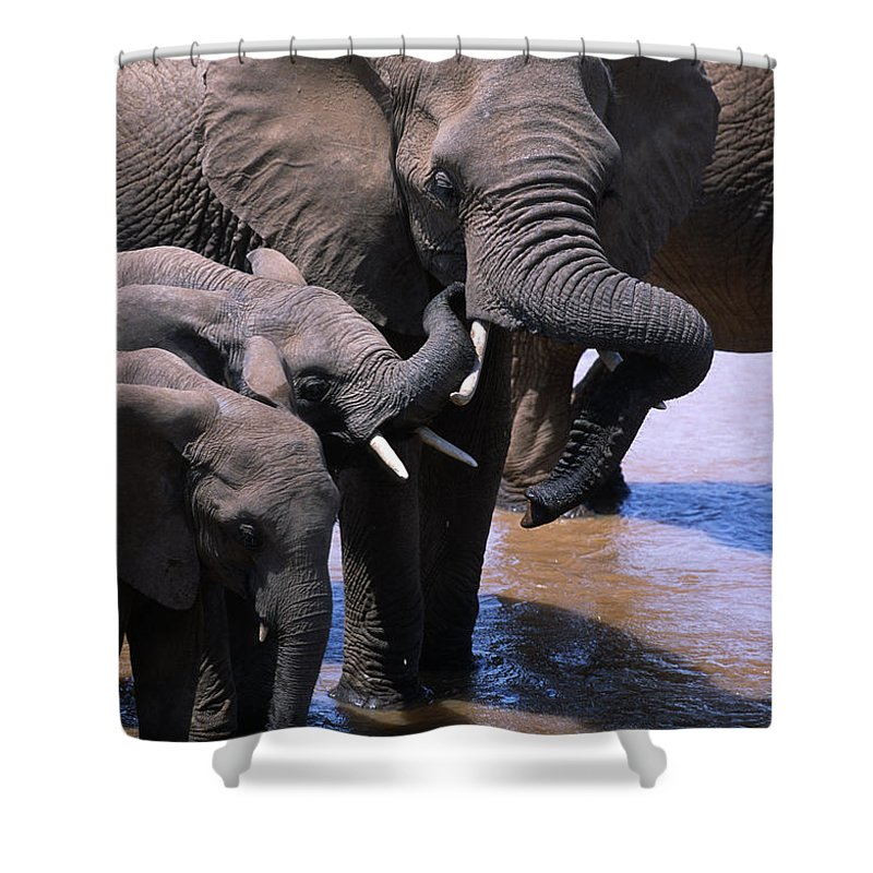 Africa Shower Curtain featuring the photograph A Refreshing Moment by Sandra Bronstein
