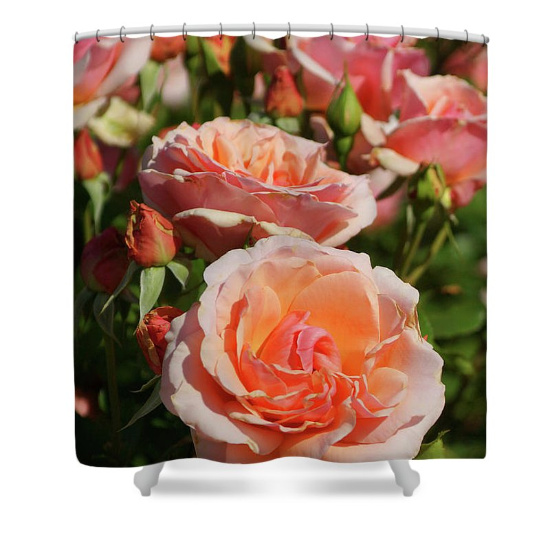Pink Shower Curtain featuring the photograph A Regiment Of Roses by Cate Franklyn