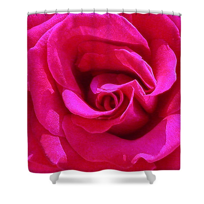 Red Rose Shower Curtain featuring the photograph A Rose Is A Rose Is A Rose by Anne Cameron Cutri