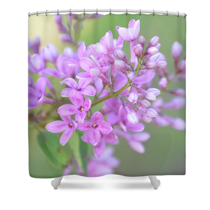 Purple Shower Curtain featuring the photograph A Shade Of Purple, A Shade Of Spring by Diane Friend