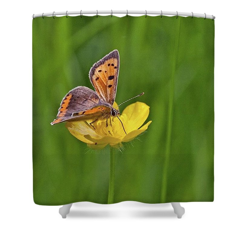 Insect Shower Curtain featuring the photograph A Small Copper Butterfly (lycaena by John Edwards