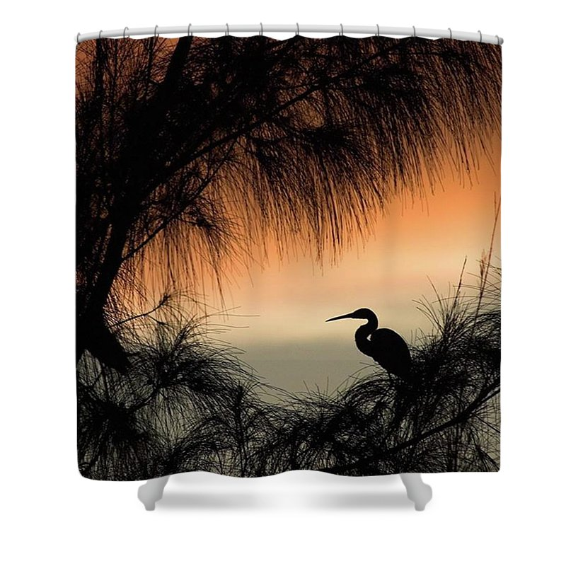 Egret Shower Curtain featuring the photograph A Snowy Egret (egretta Thula) Settling by John Edwards