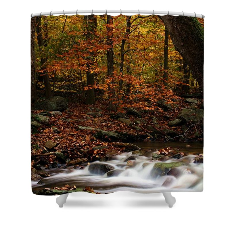 Autumn Shower Curtain featuring the photograph A Spectacle by Mitch Cat