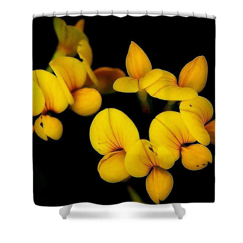 Digital Photography Shower Curtain featuring the photograph A Study In Yellow by David Lane